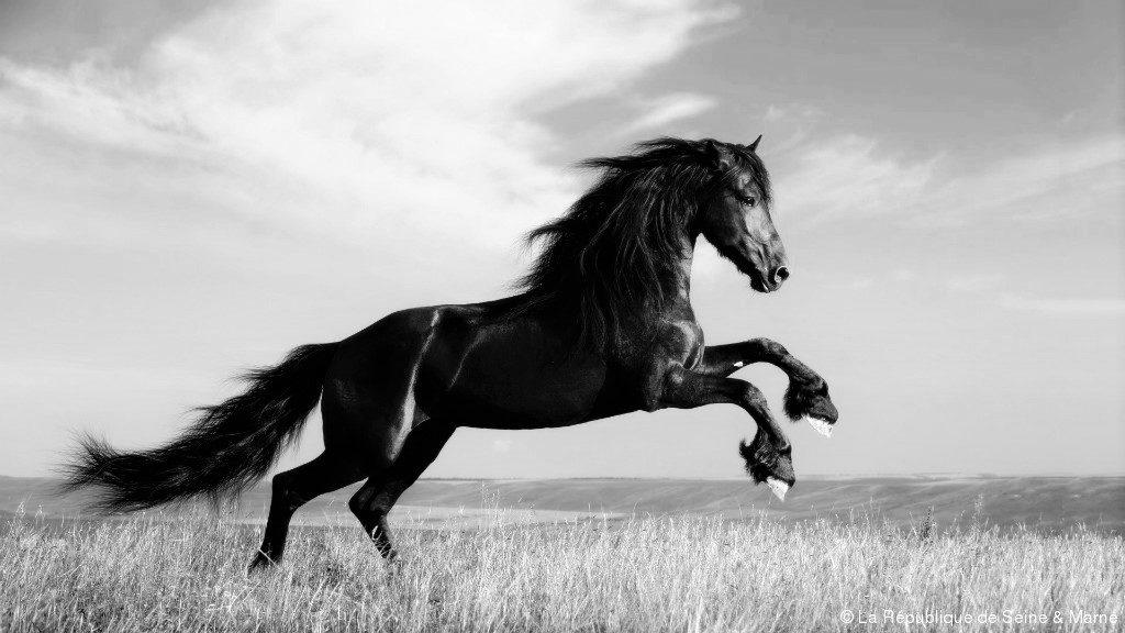 compatibilités homme cheval