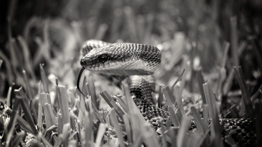 Compatibilités homme Serpent